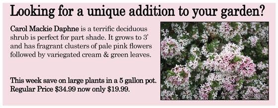 Kingu0027s Flower U0026 Garden
